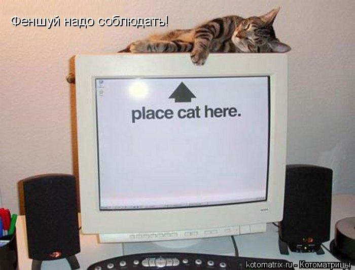 Котоматрица: Феншуй надо соблюдать!