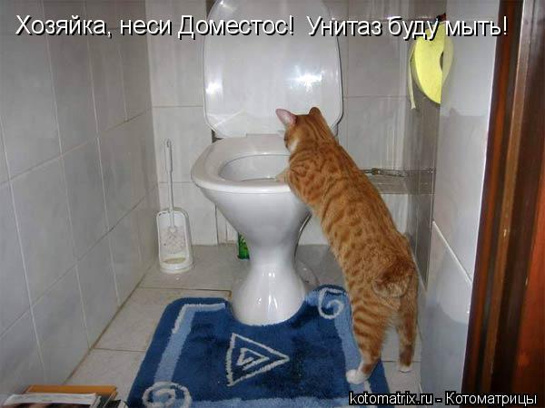 Котоматрица: Хозяйка, неси Доместос! Унитаз буду мыть!