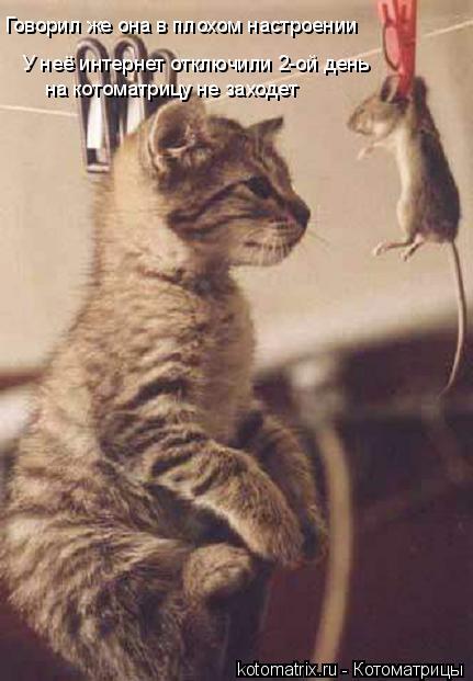 Котоматрица: Говорил же она в плохом настроении У неё интернет отключили 2-ой день на котоматрицу не заходет