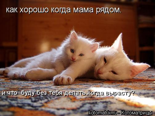 Котоматрица: как хорошо когда мама рядом. и что  буду без тебя делать,когда вырасту?