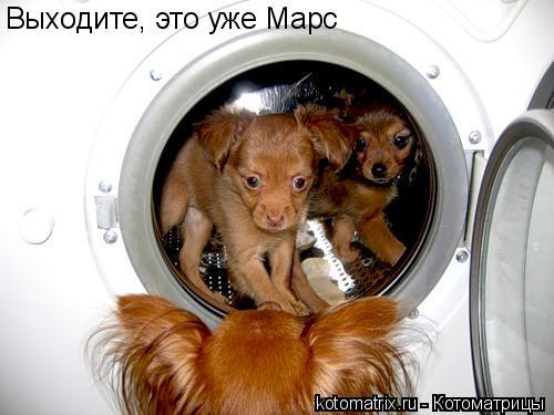 Котоматрица: Выходите, это уже Марс