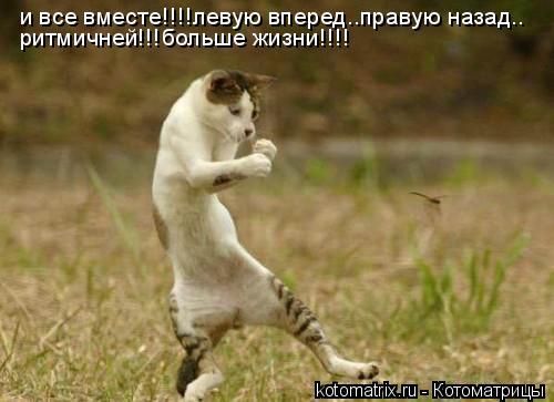Котоматрица: и все вместе!!!!левую вперед..правую назад.. ритмичней!!!больше жизни!!!!