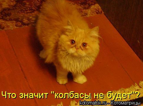 """Котоматрица: Что значит """"колбасы не будет""""?"""