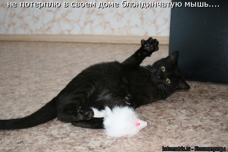 Котоматрица: не потерплю в своем доме блондинчатую мышь....