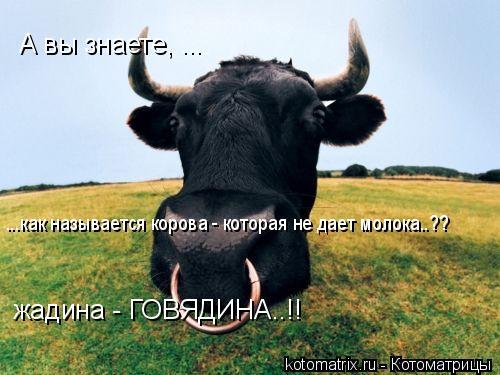 Котоматрица: А вы знаете, ... ...как называется корова - которая не дает молока..?? жадина - ГОВЯДИНА..!!