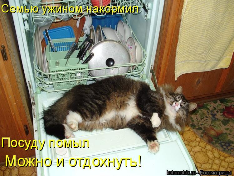 Котоматрица: Семью ужином накормил Посуду помыл Можно и отдохнуть!