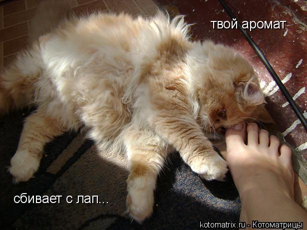 Котоматрица: твой аромат сбивает с лап...