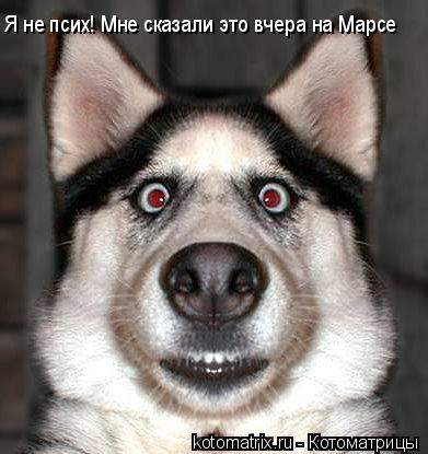 Котоматрица: Я не псих! Мне сказали это вчера на Марсе