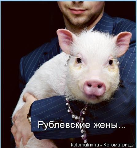 Котоматрица: Рублевские жены...