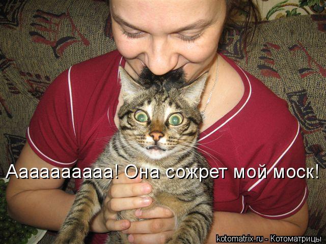 Котоматрица: Аааааааааа! Она сожрет мой моск!
