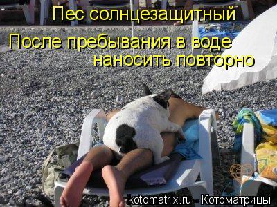 Котоматрица: Пес солнцезащитный наносить повторно После пребывания в воде