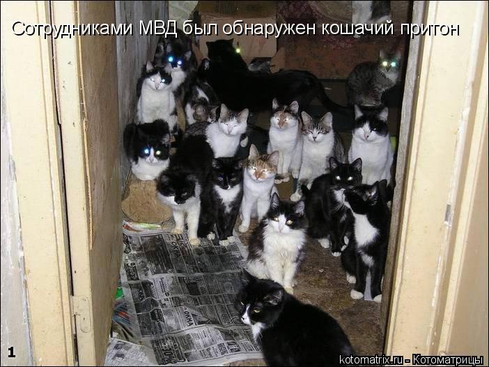Котоматрица: Сотрудниками МВД был обнаружен кошачий притон