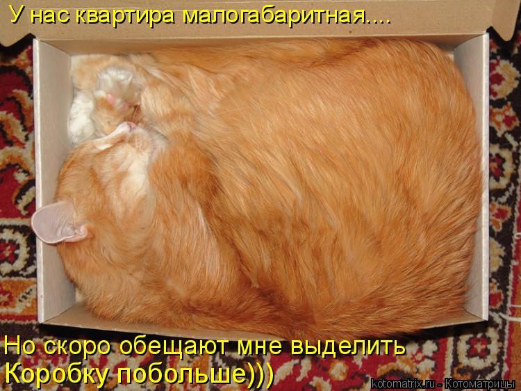 Котоматрица: У нас квартира малогабаритная.... Но скоро обещают мне выделить  Коробку побольше)))