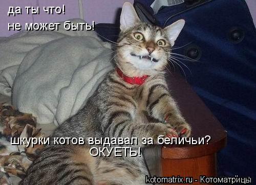 Котоматрица: да ты что! не может быть! шкурки котов выдавал за беличьи? ОКУЕТЬ!