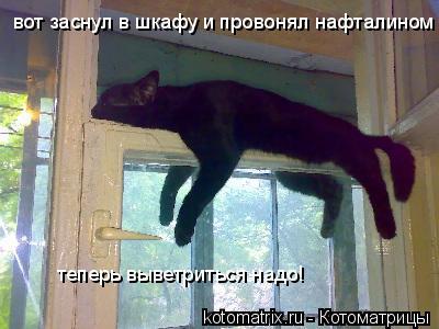 Котоматрица: вот заснул в шкафу и провонял нафталином теперь выветриться надо!