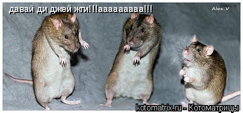 Котоматрица: давай ди джей жги!!!ааааааааа!!!