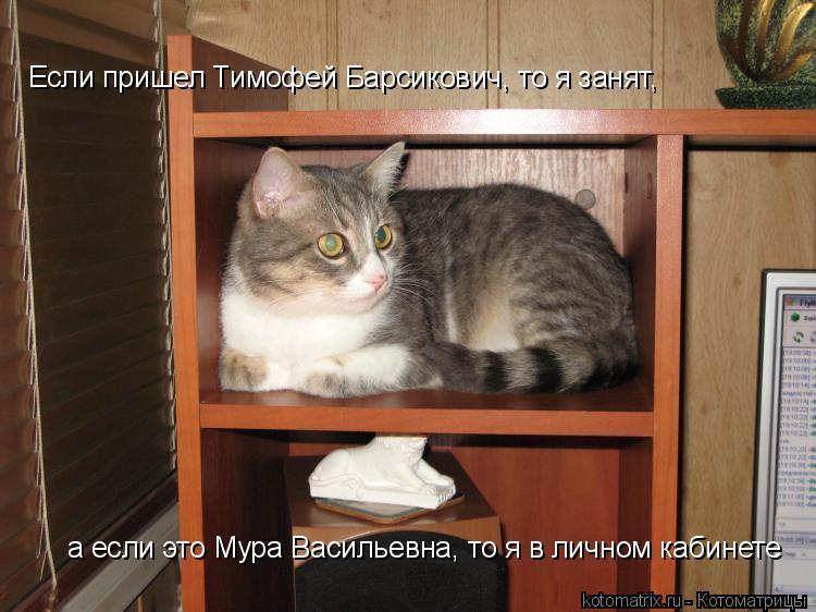 Котоматрица: Если пришел Тимофей Барсикович, то я занят,  а если это Мура Васильевна, то я в личном кабинете