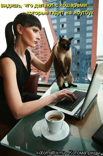Котоматрица: видишь, что делают с кошарами... ...которые гадят на ноутбук