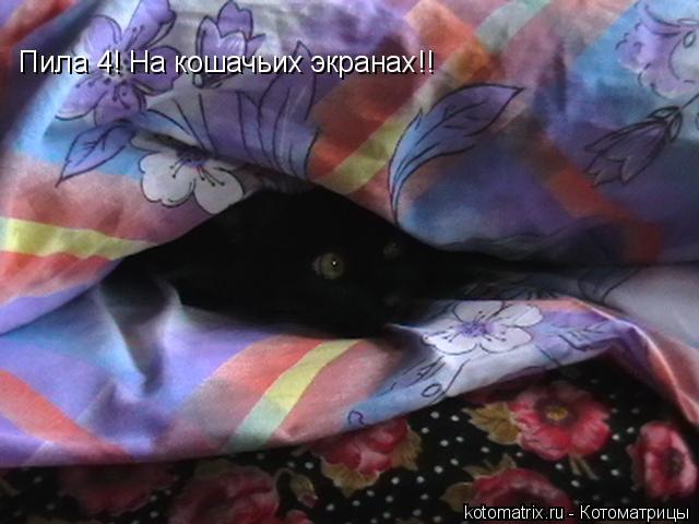 Котоматрица: Пила 4! На кошачьих экранах!!