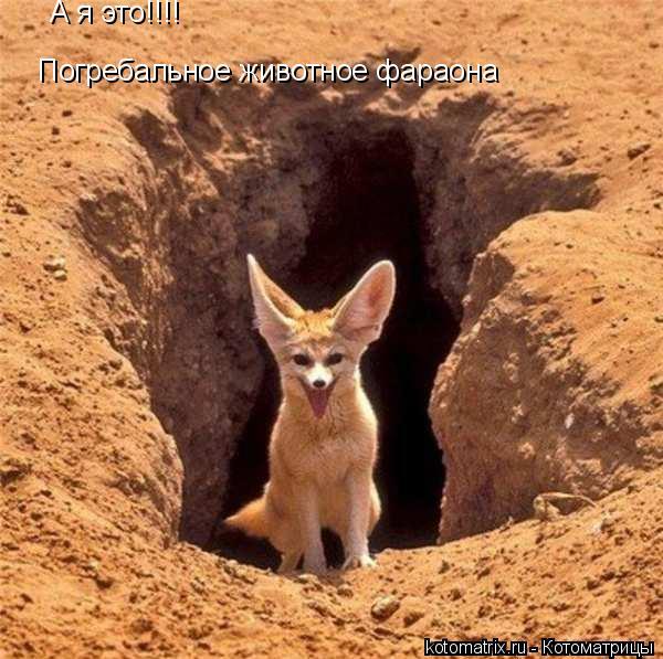Котоматрица: А я это!!!!  Погребальное животное фараона