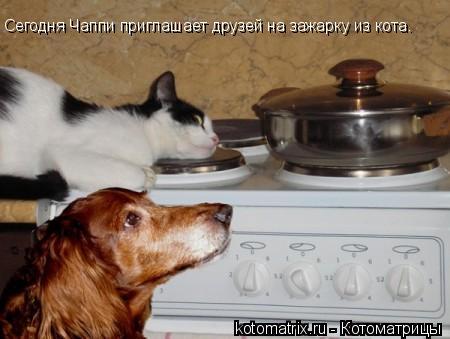 Котоматрица: Сегодня Чаппи приглашает друзей на зажарку из кота.
