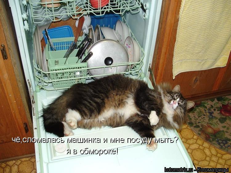 Котоматрица: чё,сломалась машинка и мне посуду мыть? я в обмороке!