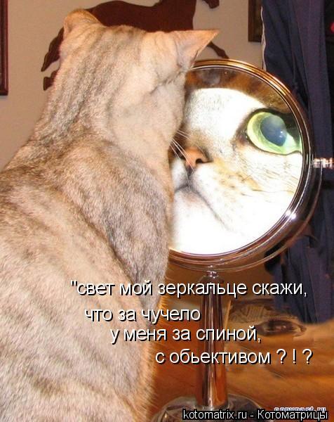 """Котоматрица: """"свет мой зеркальце скажи, что за чучело  у меня за спиной, с обьективом ? ! ?"""