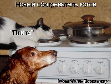 """Котоматрица: Новый обогреватель котов """"Плита"""""""