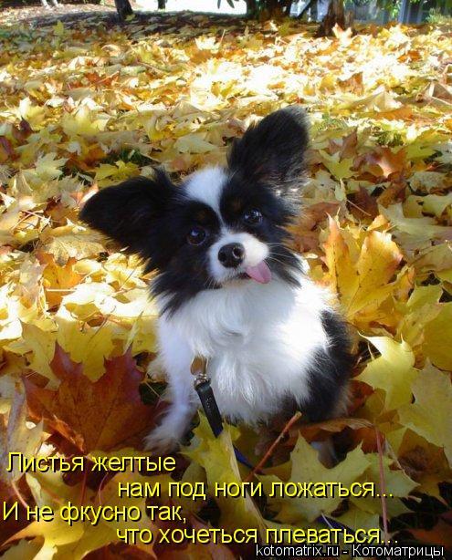 Котоматрица: Листья желтые  нам под ноги ложаться...  И не фкусно так, что хочеться плеваться...