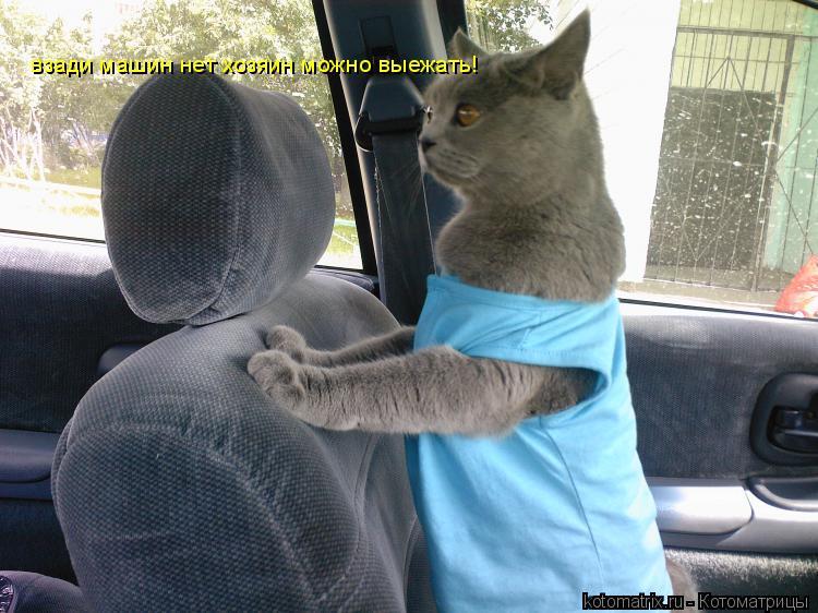 Котоматрица: взади машин нет хозяин можно выежать!