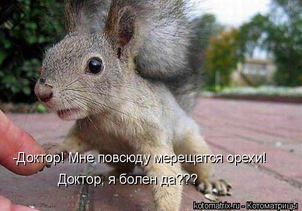 Котоматрица: -Доктор! Мне повсюду мерещатся орехи!  Доктор, я болен да???