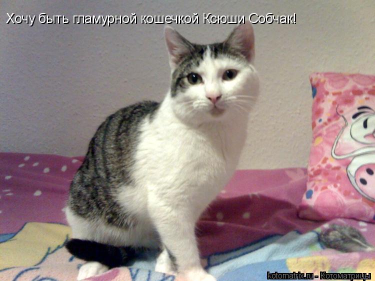 Котоматрица: Хочу быть гламурной кошечкой Ксюши Собчак!