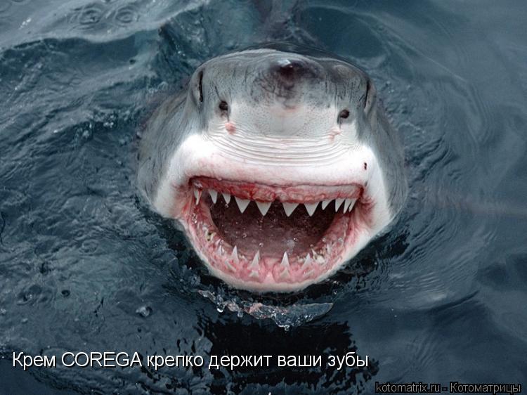 Котоматрица: Крем COREGA крепко держит ваши зубы