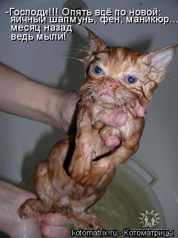 Котоматрица: -Господи!!! Опять всё по новой: яичный шапмунь, фен, маникюр...  месяц назад ведь мыли!