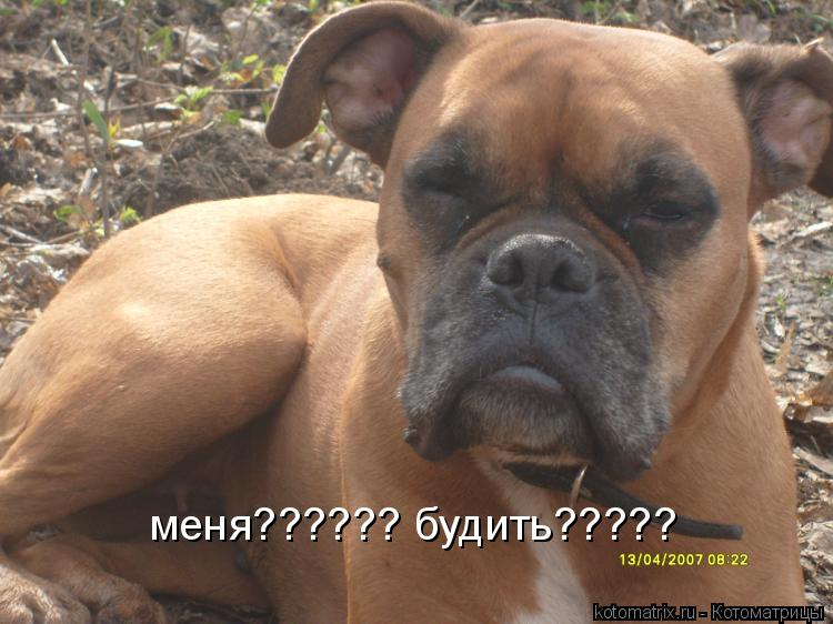 Котоматрица: меня?????? будить?????