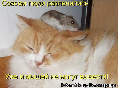 Котоматрица: Совсем люди разленились... Уже и мышей не могут вывести!