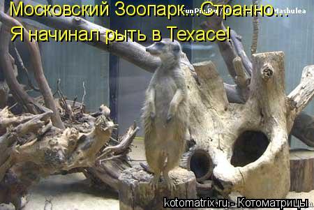 Котоматрица: Московский Зоопарк...Странно... Я начинал рыть в Техасе!