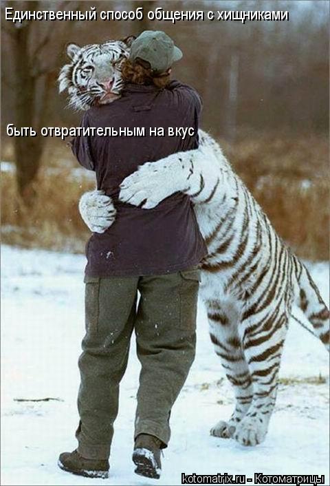 Котоматрица: Единственный способ общения с хищниками быть отвратительным на вкус