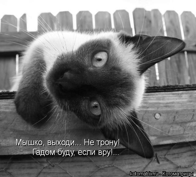Котоматрица: Мышко, выходи... Не трону! Гадом буду, если вру!...