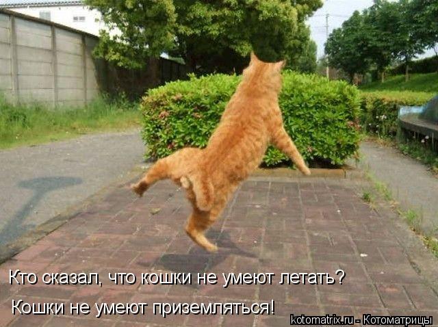 Котоматрица: Кто сказал, что кошки не умеют летать?  Кошки не умеют приземляться!