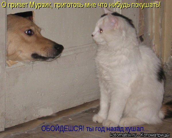 Котоматрица: О привет Мурзик, приготовь мне что нибудь покушать! ОБОЙДЕШСЯ! ты год назад кушал...