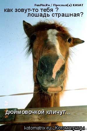 Котоматрица: как зовут-то тебя ? лошадь страшная? дюймовочкой кличут...