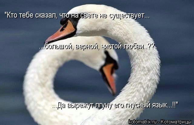 """Котоматрица: """"Кто тебе сказал, что на свете не существует... ...большой, верной, чистой любви..?? ...Да вырежут лгуну его гнусный язык...!!"""""""