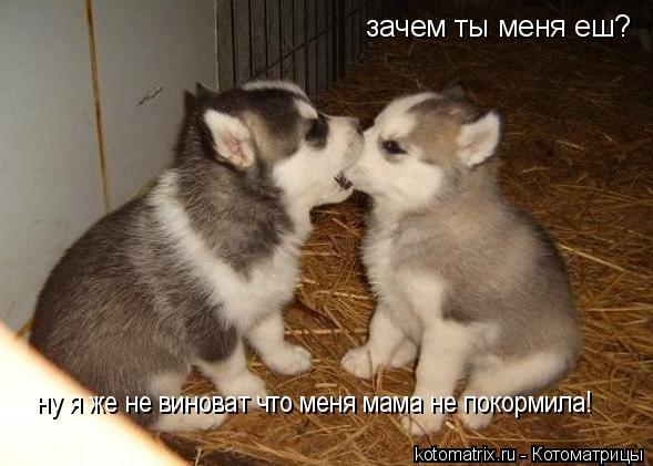 Котоматрица: зачем ты меня еш? ну я же не виноват что меня мама не покормила!