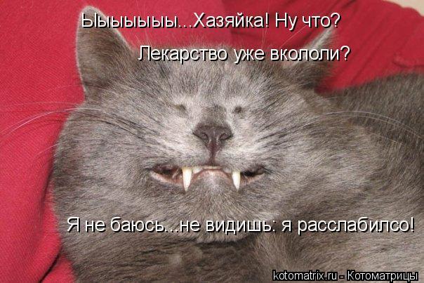 Котоматрица: Ыыыыыыы...Хазяйка! Ну что? Лекарство уже вкололи? Я не баюсь...не видишь: я расслабилсо!