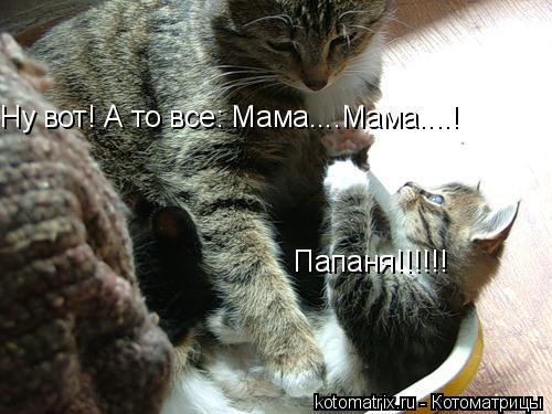 Котоматрица: Папаня!!!!!! Ну вот! А то все: Мама....Мама....!