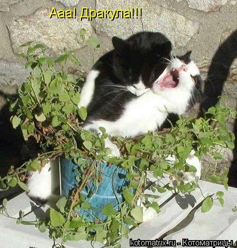 Котоматрица: Ааа! Дракула!!!