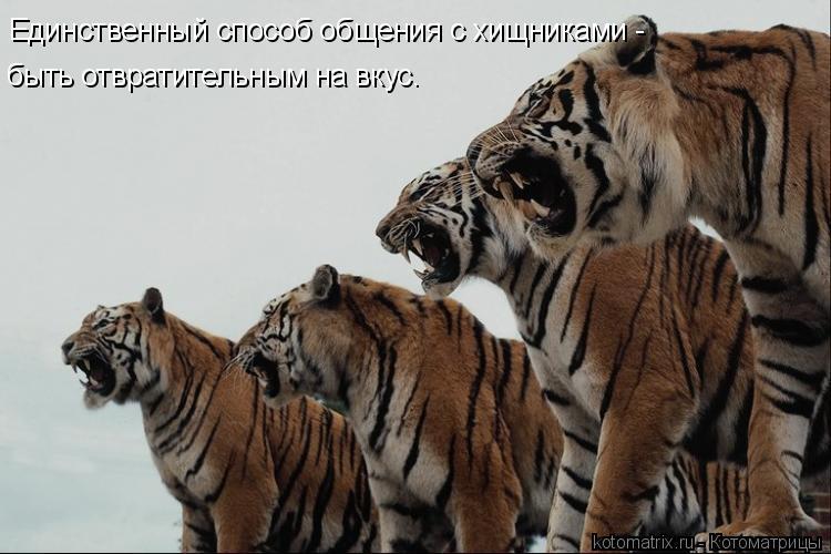 Котоматрица: Единственный способ общения с хищниками -  быть отвратительным на вкус.