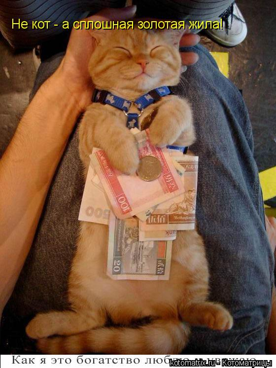 Котоматрица: Не кот - а сплошная золотая жила!