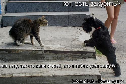 Котоматрица: кот, есть закурить? неа нету, так что вали скорей, ато я тебя в узел закручу!
